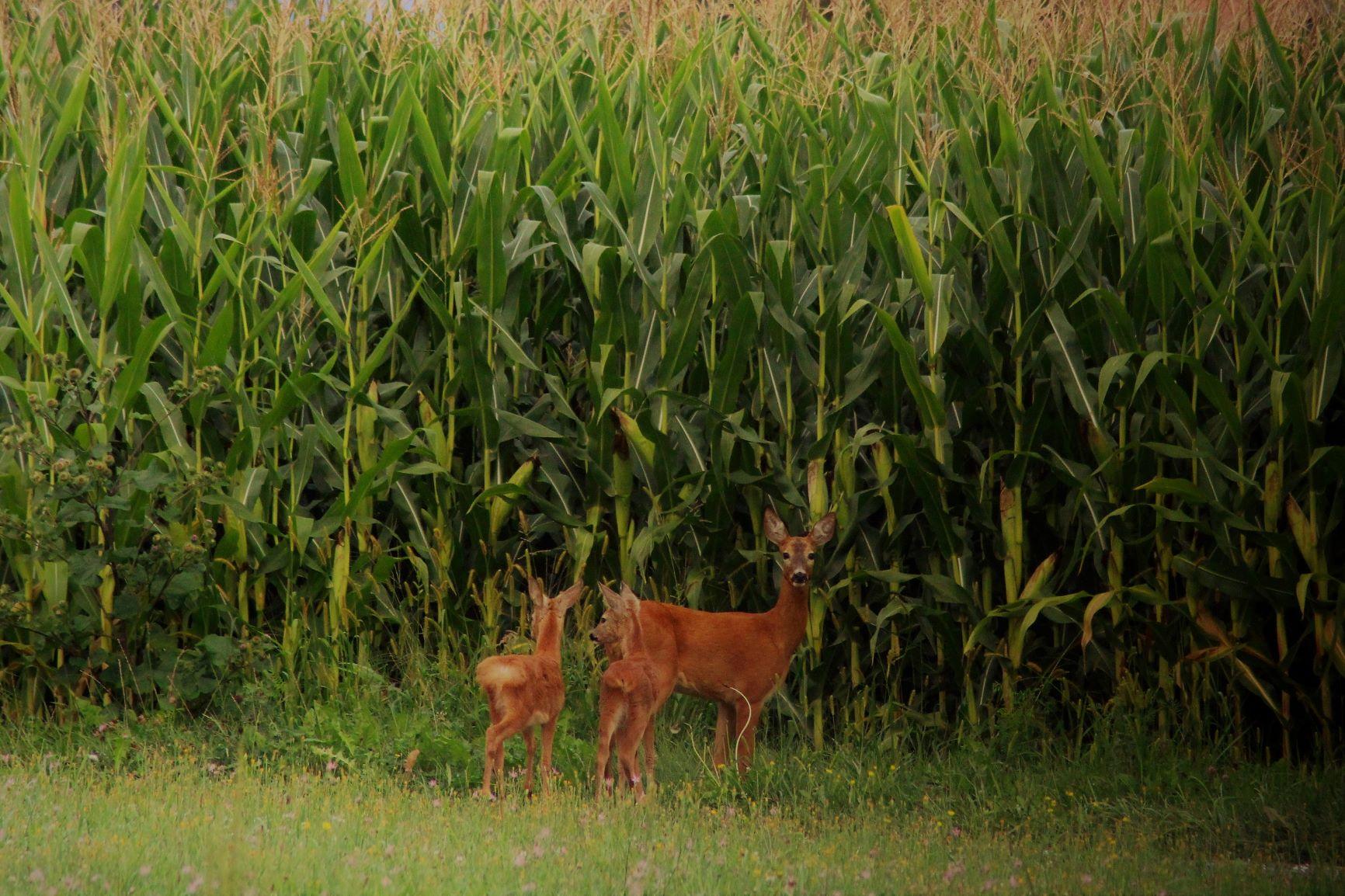 Jagd & Natur                                                              entdecken, verstehen & erleben